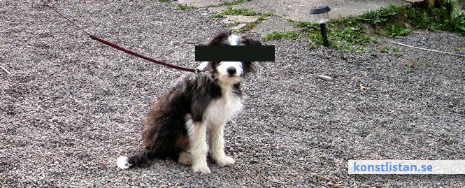 Jag publicerar inte någon bild på rondellhundarna. Jaggör inte heller som Aftonbladet och de flesta andra attpublicera en bild på Lars Vilks. Istället väljer jag en trevlig bild på en anonym vovve.